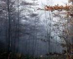 Duhovna dimenzija šume
